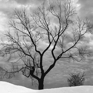 Lonely Tree Live Wallpaper v1.38